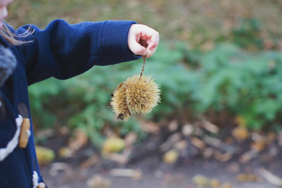 autumn-26